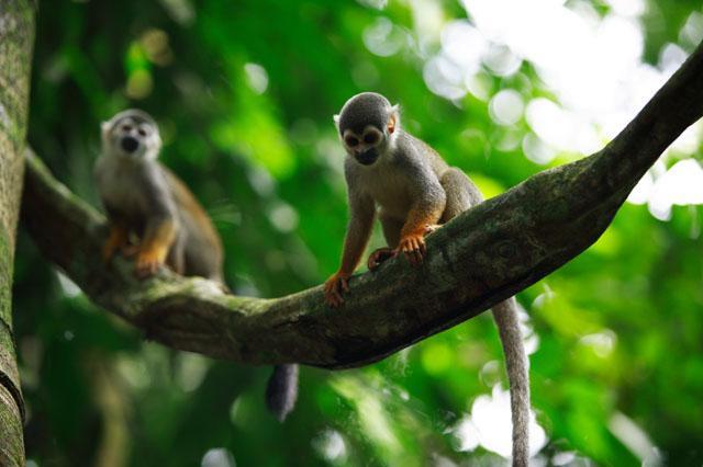 extinción de flora y fauna biodiversa en la Amazonía peruana